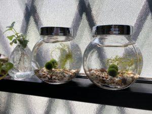 はじめまして。毬藻です。