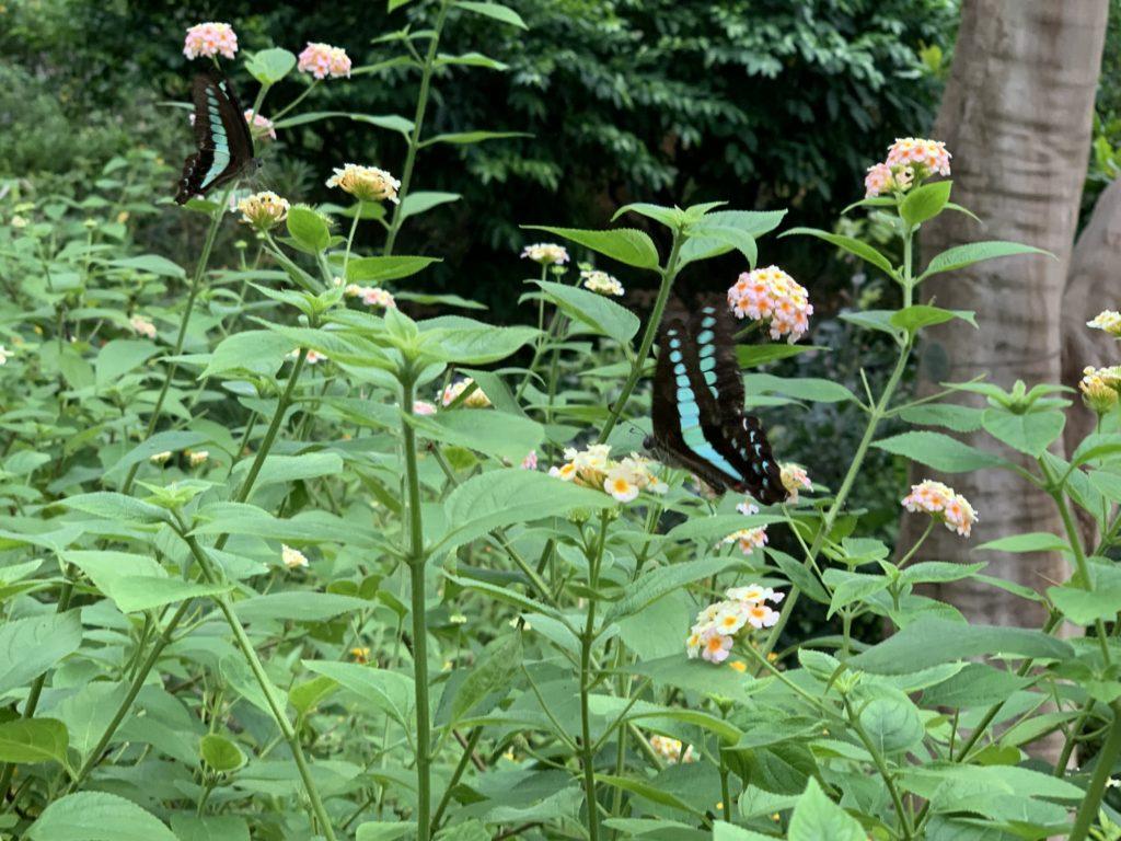 多摩動物園 昆虫館