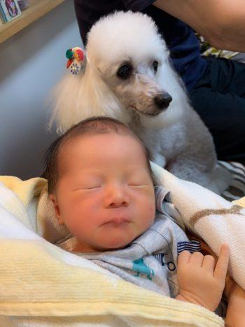 三人目の孫が誕生しました。
