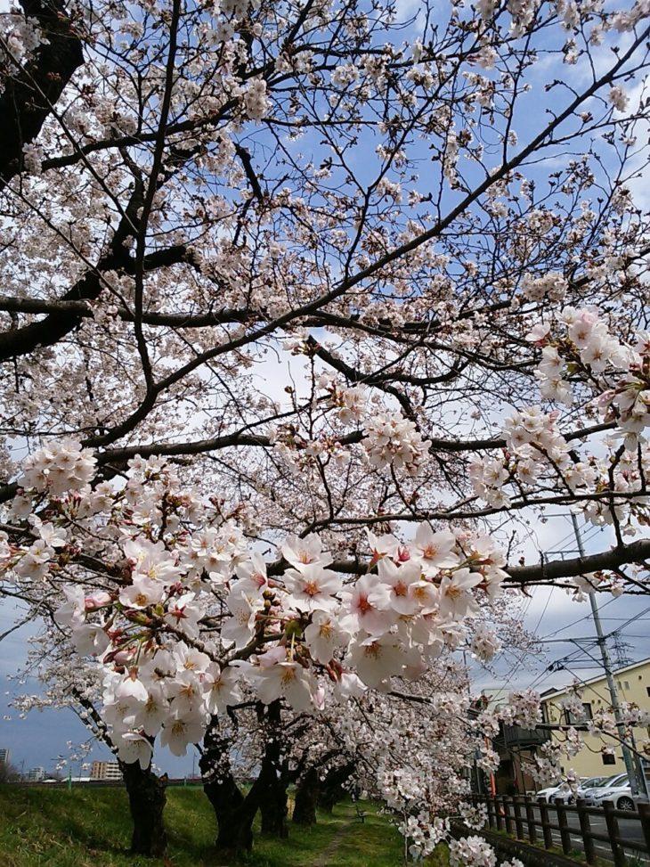 桜が咲きました ♡
